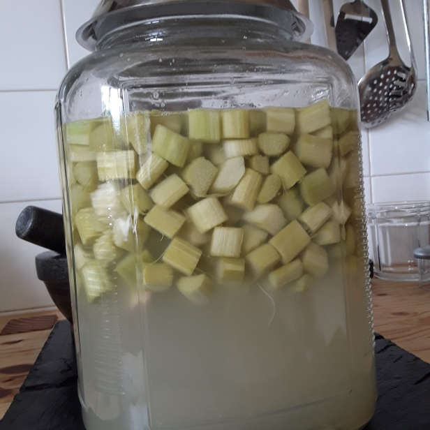 Maceration eau de rhubarbe