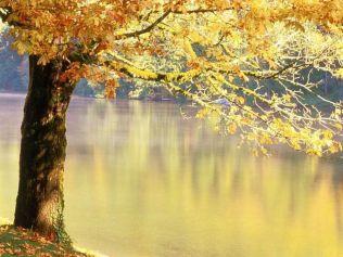 automne hiver